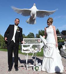 Hochzeitstauben Weisse Tauben Zur Hochzeit Hamburg Und